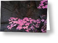 Pink Fall Colors In Sedona Arizona Greeting Card by Dave Dilli
