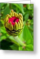 Pink Flower Bud Greeting Card by Eva Kondzialkiewicz