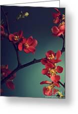 Pink Flower Greeting Card by Jelena Jovanovic
