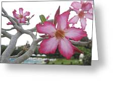 Pink Flower Greeting Card by Russell Smidt