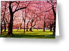 Pink Forest Greeting Card by Patti Whitten