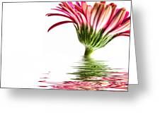 Pink Gerbera Flood 3 Greeting Card by Steve Purnell