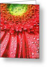 Pink Gerbera Flower Greeting Card by Odon Czintos