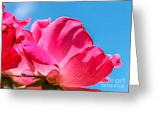 Pink Glory Greeting Card by Brandon Hussey