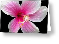 Pink Hibiscus In The Rain Painted Greeting Card by Cheryl Young