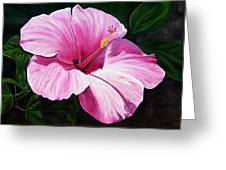 Pink Hibiscus Greeting Card by Lyndsey Hatchwell