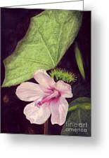 Pink Hibiscus Greeting Card by Mukta Gupta