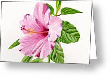 Pink Hibiscus With White Background Greeting Card by Sharon Freeman