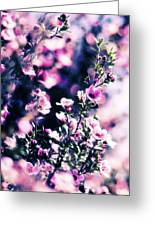 Pink Manuka Flowers Greeting Card by motography aka Phil Clark
