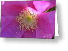 Pink Ocean Wildflower Greeting Card by Neal  Eslinger