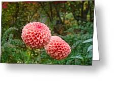 Pink Orange Dahlia Flowers Art Prints Gardens Greeting Card by Baslee Troutman
