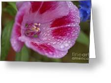 Pink Rain Flower 1 Greeting Card by Carol Lynch