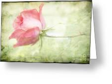 Pink Rose Greeting Card by Joan McCool