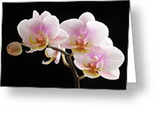 Pink Sensations Greeting Card by Juergen Roth