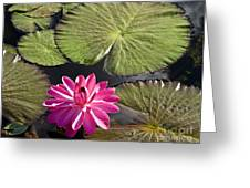 Pink Water Lily II Greeting Card by Heiko Koehrer-Wagner