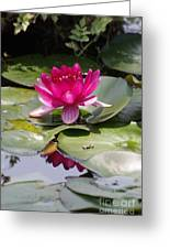 Pink Water Lily Greeting Card by Tannis  Baldwin