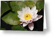 Pink Watter Lilly Greeting Card by Gilbert Artiaga