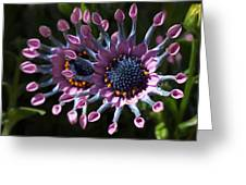 Pink Whirls Greeting Card by Rona Black