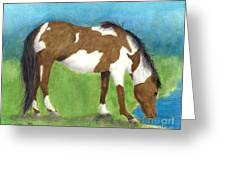 Pinto Mustang Horse Mare Farm Ranch Animal Art Greeting Card by Cathy Peek