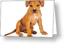 Pit Bull Puppy Fawn Color Greeting Card by Susan  Schmitz