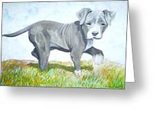 Pitbull Puppy Greeting Card by Martial Martin