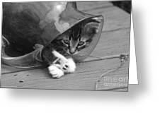 Pitcher Kitten Greeting Card by Tannis  Baldwin