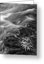 Little Plant Greeting Card by Jon Glaser