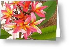 Plantation Plumeria Greeting Card by James Temple