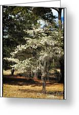 Plantation Tree Greeting Card by John Rizzuto