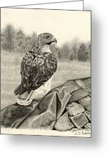 Pleasant Valley Red-tailed Hawk Greeting Card by Sarah Batalka