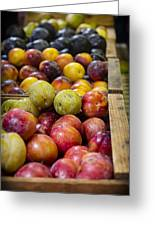 Plum Gorgeous Greeting Card by Caitlyn  Grasso