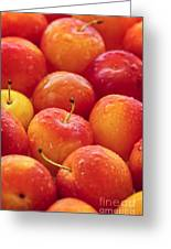 Plums  Greeting Card by Elena Elisseeva