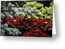 Poinsettia Garden Greeting Card by Gene Sherrill