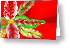 Pointsettia Greeting Card by Doris Culverhouse