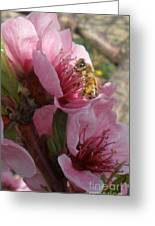 Pollinate Greeting Card by Polly Anna