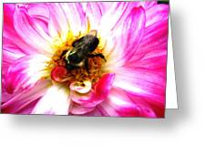 Pollination Nation 2 Greeting Card by Will Boutin Photos