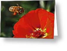 Pollination Greeting Card by Rona Black