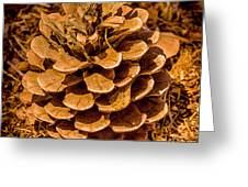 Ponderosa Pine Cone Greeting Card by  Bob and Nadine Johnston