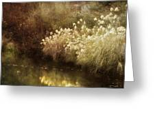 Pond's Edge Greeting Card by Julie Palencia