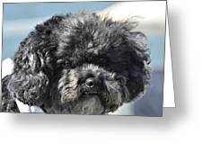 Poodle Greeting Card by Susan Leggett
