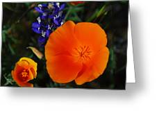 Poppies And Lupine Greeting Card by Lynn Bauer