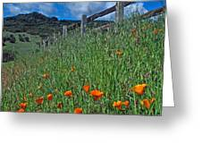 Poppies and the Fence Greeting Card by Kathy Yates