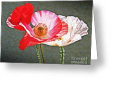 Poppies  Greeting Card by Chris Berry