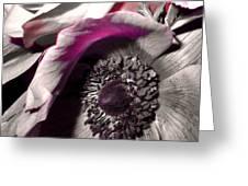 Poppy Eye Greeting Card by Sharon Costa