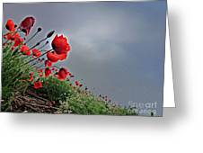 Poppy Field After Summer Storm Greeting Card by AmaS Art