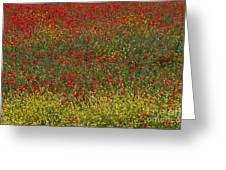 Poppy Field Greeting Card by Bob Phillips
