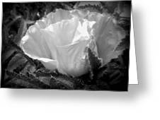 Poppy Flower 2 Greeting Card by Heather L Wright