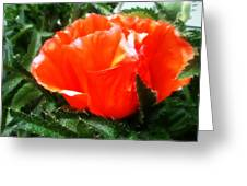 Poppy Flower Greeting Card by Heather L Wright