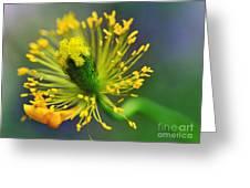 Poppy Seed Capsule 2 Greeting Card by Kaye Menner
