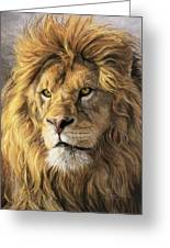 Portrait Of A Lion Greeting Card by Lucie Bilodeau